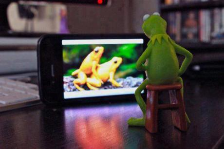 frogporn