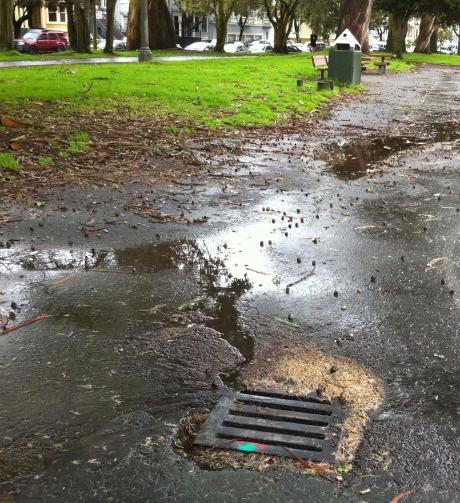 rain-soaked gutter