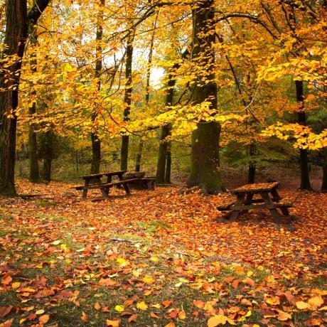 Autumn-Leaves-Falling
