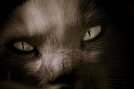Frightening Friday_cat