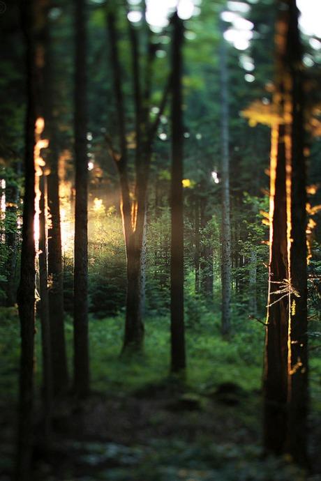 treesandlight