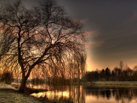 treeandriver