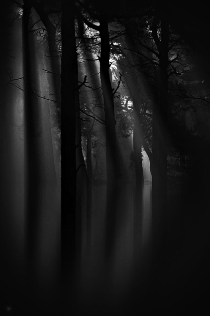 trees-and-light