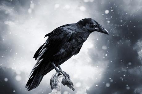 a-raven-2