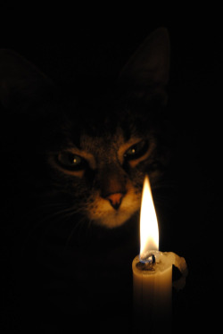 cat-and-candle2