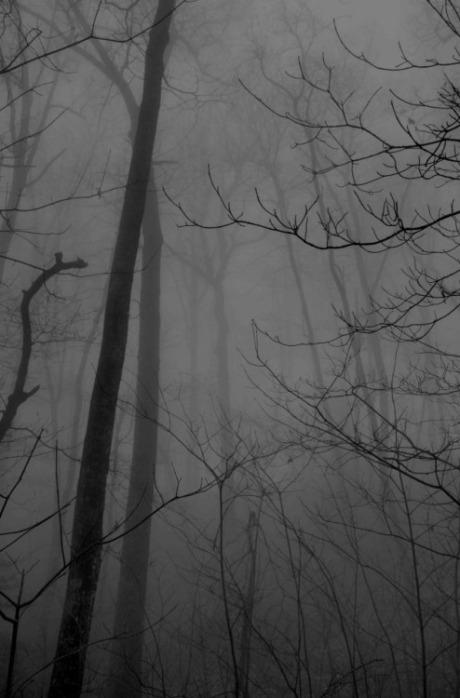 mist-and-trees