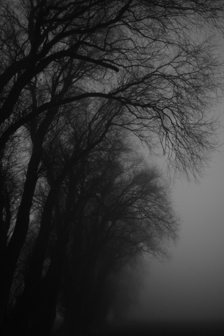 foggy-morning