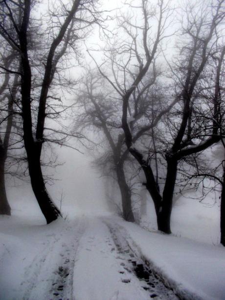 claudia-gaiotto-misty-morning-me