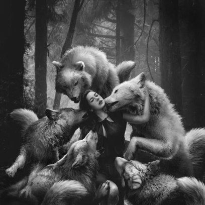 for-the-love-of-wolves