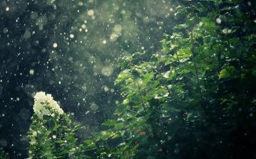 rain-on-trees