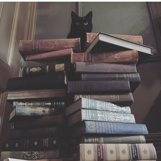cat on a hot book pile