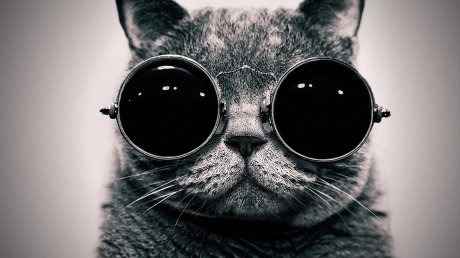 cat in shades